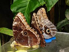 Skleník Fata Morgana: Kouzlo proměny a křehká motýlí krása