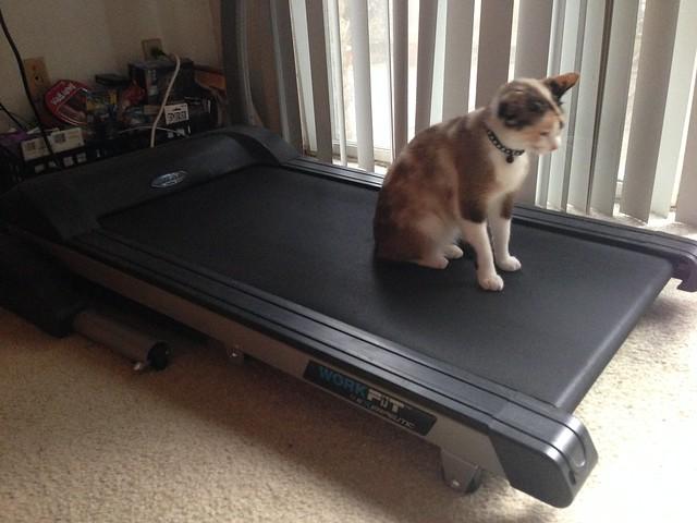 Tinny treadmill