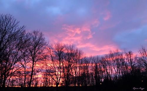sunset sky cloud lund tree tramonto nuvola sonnenuntergang sweden schweden himmel wolke ciel cielo árbol sverige 木 nuage 雲 albero arbre 空 ocaso baum nube träd suecia coucherdesoleil solnedgång moln suède スウェーデン svezia 日没 linero