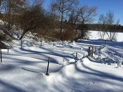 snowshovelling garden IMG_0411