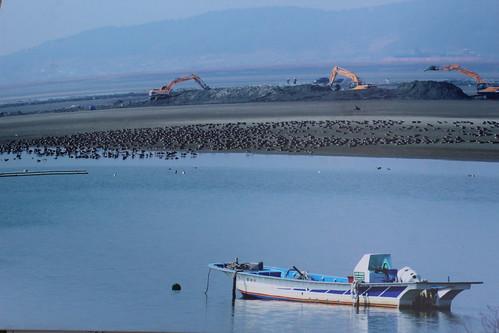 開發工程進行同時候鳥受到驚嚇而於現場徘徊;圖片翻拍來源:KFEM