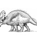 Albertaceratops, based on Scott Hartman's skeletal drawing by paul heaston