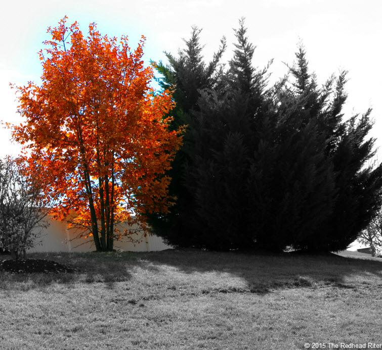 orange yellow tree with shadow 755