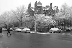 Spring Snow 2015