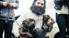 Papa Simba meets the pups