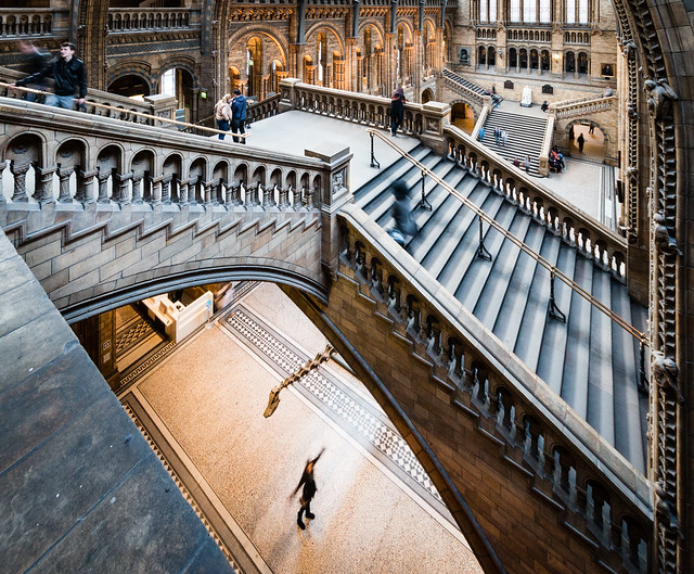 Natural History Museum - Dippy Under Stairs - 82/365