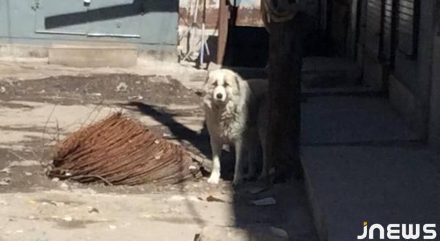 Собаки 5