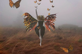 Butterflies part III- a collaboration with Keith Clontz.