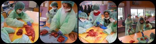 cirurxía 3