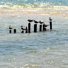 #birds of #busaiteen #hightide #water #coast #Bahrain #muharraq