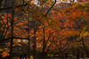 Photo:室生寺の紅葉 / Autumn Leaves at Muro-ji Temple By kimtetsu