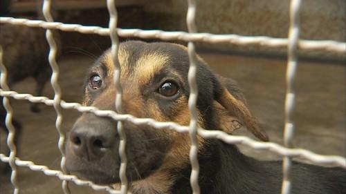 TNR讓溫和的狗狗能在安全的地方終老