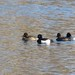 nathandubrow has added a photo to the pool:Deer Island, Amesbury, MA- 3/29/15ebird.org/ebird/view/checklist?subID=S22578277