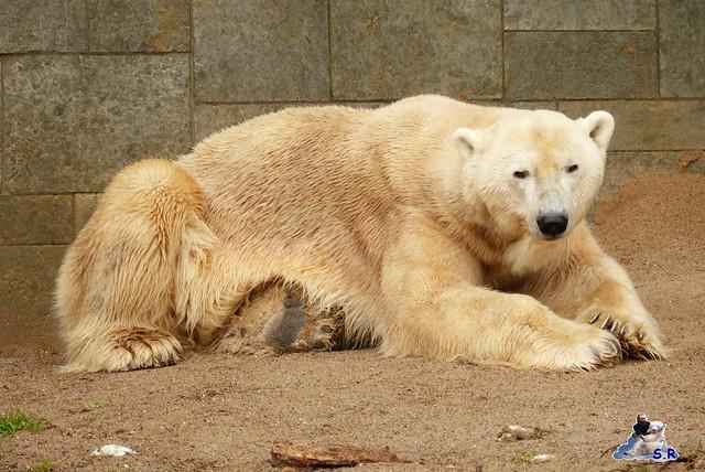 Eisbär Taufe Fiete Zoo Rostock 31.03.21015 202