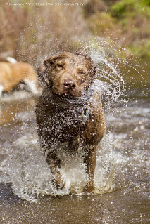 Harriet Running Shake Off!