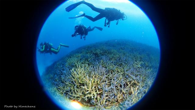 サンゴもキレイでした!