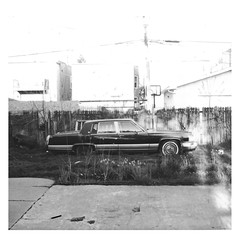 backyard sedan polaroid