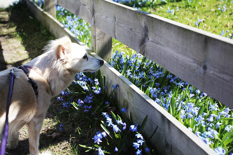 150423 - Hundpromenad
