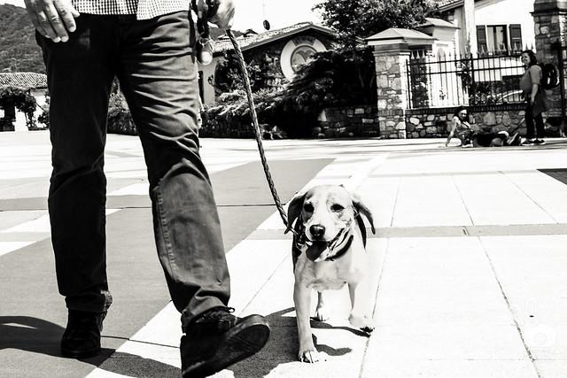 Un Beagle per Amico