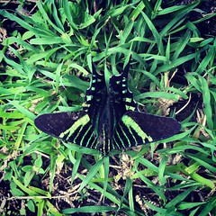 Butterfly of knowledge #ciudaddelsaber #panama507 #panama #panamacanal #cityofknowledge #cityofknowledgepanama