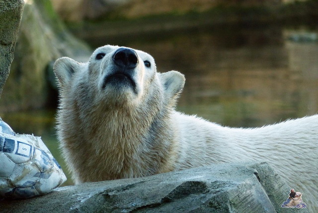 Zoo am Meer 08.03.2015  30
