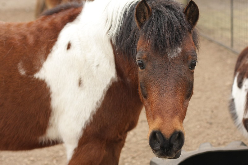 the new pony (i forgot his name)