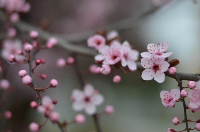 pink, wildflower girl, fashion blog, outfit, daniel wellington (1)