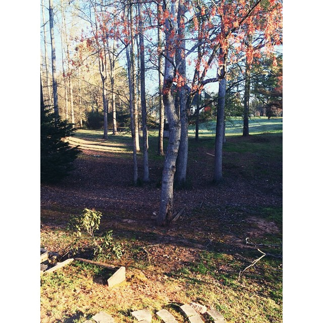 #sundaymorning #pretty #backyard #northgeorgia #atlanta #cummingGA #trees #nature #momlife #igersatl #georgia #iloveatl #weloveatl #sunlight
