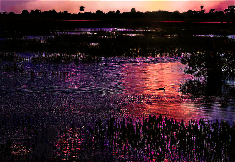 Image of the Viera Wetlands at sunset