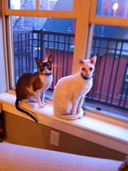 Dewey & Mo