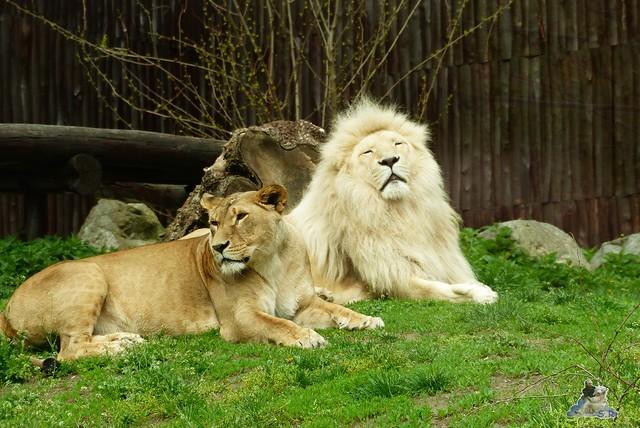 Zoo Bratislava 18.04.2015 40