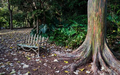 color gardens rainbow florida eucalyptus impression coralgables d800 fairchildgardens nikond800 littletinperson