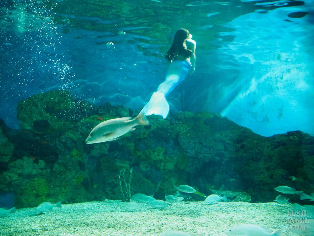 mermaid-experience-boracay