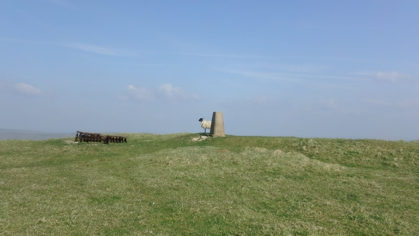 Sheep at trig. point next to dried out pond on South Downs Way above Ouse Valley