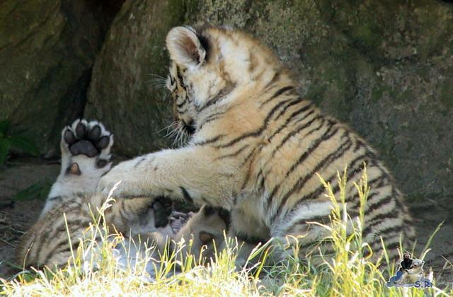 Zoo Eberswalde 04.06.2011 181