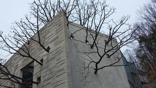 나무가 자라는 집? BSSM 백순실미술관