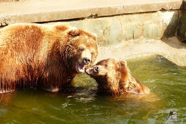 Eisbär Fiete Zoo Rostock 11.04.2015 Teil 1 166