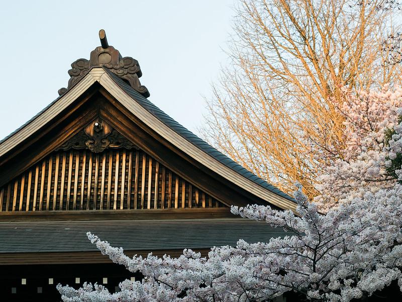 Cherry Blossoms in Yasukuni Shrine