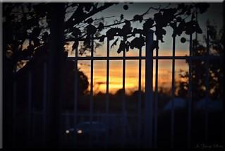 Fenced Friday-Sunset-HFF