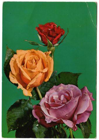 Flower print. Source unknown.