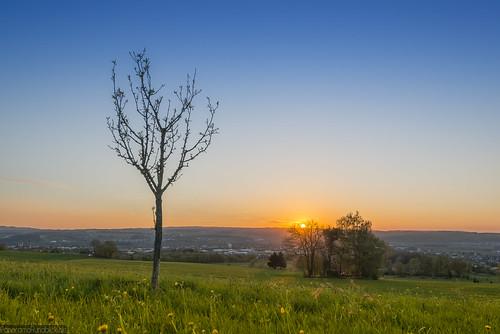 landscape spring sonnenuntergang stmartin kreuz landschaft basilika frühling weingarten oberschwaben schussental