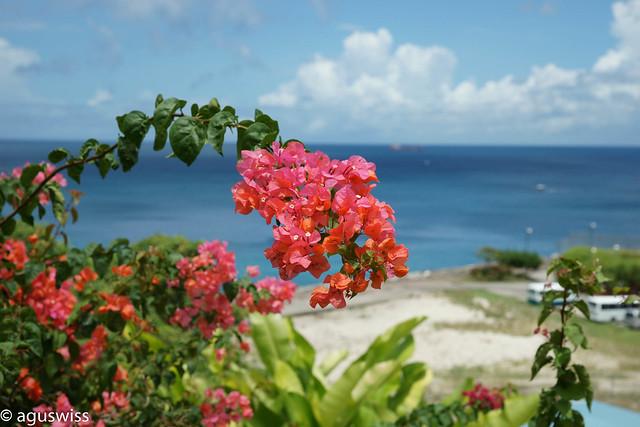 Caribbean blooming