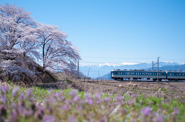 勝沼ぶどう郷駅 甚六桜 2015
