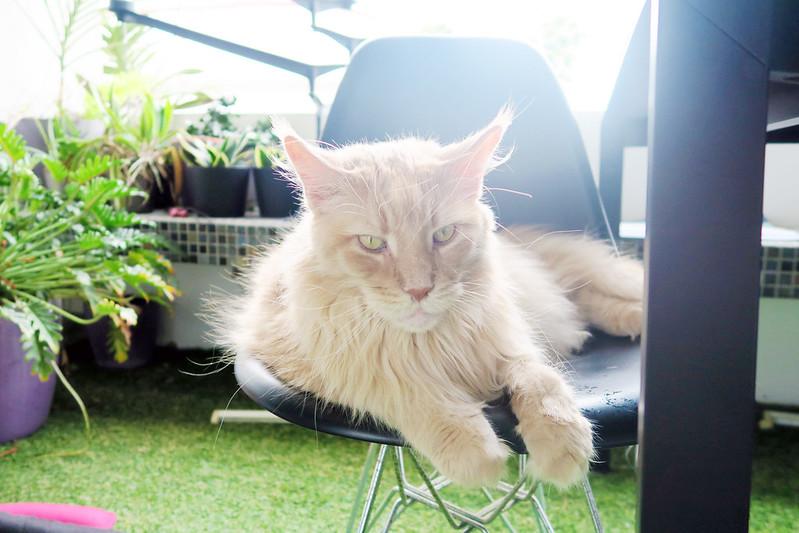 typicalben cat