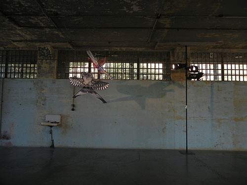 DSCN1462 _ @Large_ Ai Weiwei on Alcatraz