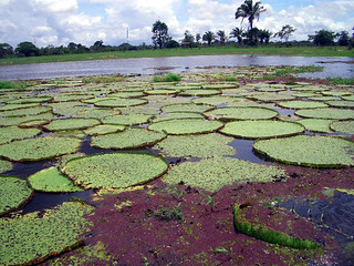Biomas brasileiros,