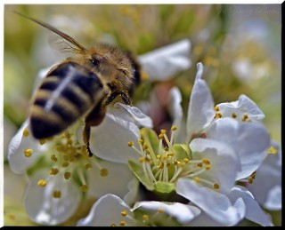 The Weekly Theme Challenge-Honey Bee