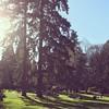 Lots of people enjoying Laurelhurst Park on this sunny winter/spring day.