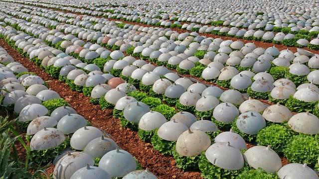 Alta tecnología agraria