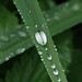 raindrops on foliage